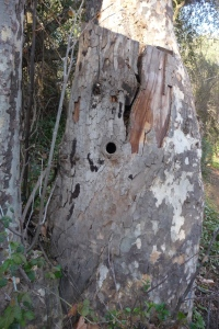 5' stump_1024